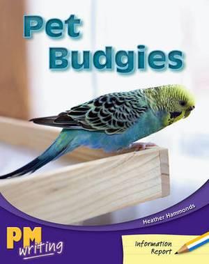 Pet Budgies