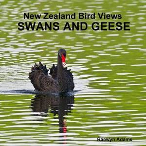 New Zealand Bird Views: Swans and Geese