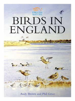 Birds in England