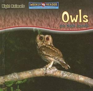 Owls Are Night Animals