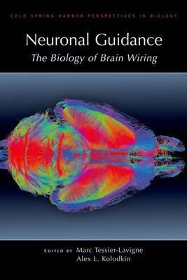 Neuronal Guidance: The Biology of Brain Wiring