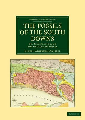 The Fossils of the South Downs: Or, Illustrations of the Geology of Sussex