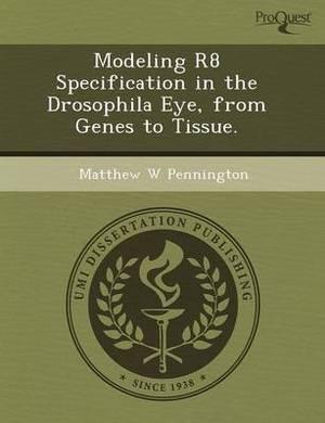 Modeling R8 Specification in the Drosophila Eye