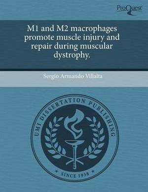M1 and M2 Macrophages Promote Muscle Injury and Repair During Muscular Dystrophy