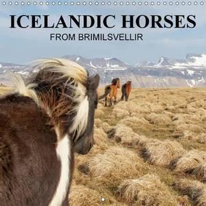 Icelandic Horses from Brimilsvellir: Icelandic Horses