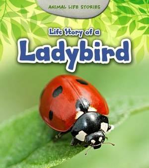 Life Story of a Ladybird
