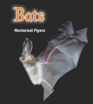 Bats: Nocturnal Flyers