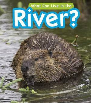 What Can Live in a River?