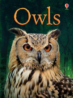 BEG Owls