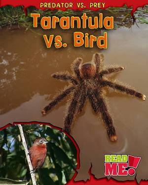 Tarantula vs. Bird