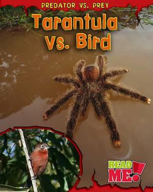 Tarantula vs. Bird