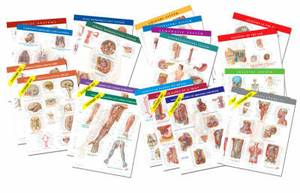 Netter Anatomy Charts: Complete Set of 20 Charts