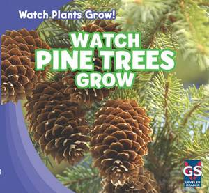 Watch Pine Trees Grow
