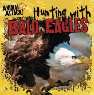 Hunting with Bald Eagles