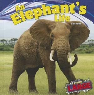 An Elephant's Life