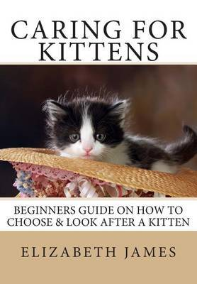 Caring for Kittens: Beginners Guide on How to Look After a Kitten