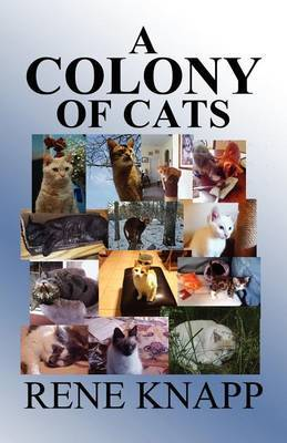 A Colony of Cats