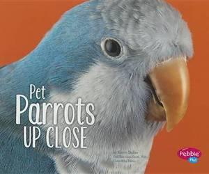 Pet Parrots Up Close
