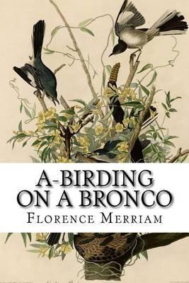 A-Birding on a Bronco