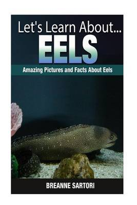 Eels: Amazing Pictures and Facts about Eels