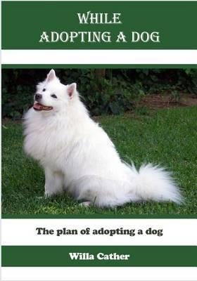 While Adopting a Dog: The Plan of Adopting a Dog