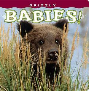 Grizzly Babies!