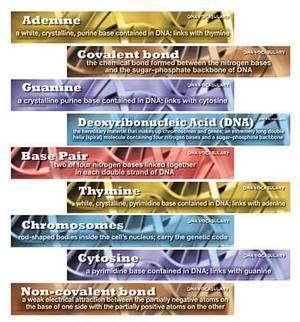 DNA Vocabulary Mini Bulletin Board Set