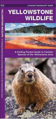 Yellowstone Wildlife: A Folding Pocket Guide to Familiar Animals of the Yellowstone Area