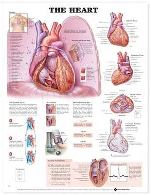 The Heart 3D Raised Relief Chart