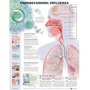 Understanding Influenza