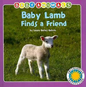 Baby Lamb Finds a Friend