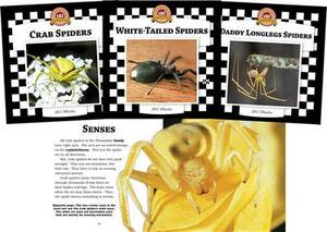 Spiders Set 2: Checkerboard Animal Library Anniversary Edition