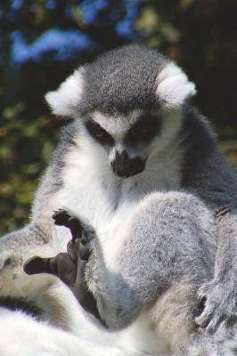 Ring-Tailed Lemur Says, I Can't Stop My Leg! Journal: 150 Page Lined Notebook/Diary