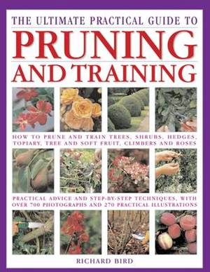 Pruning: Training and Topiary