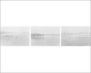 Robert Adams - Light Balances / on Any Given Day in Spring