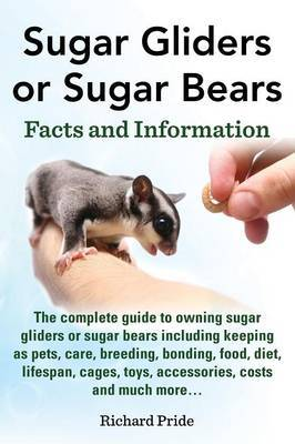 Sugar Gliders or Sugar Bears: Facts and Information