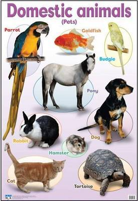 Domestic animals: Gr R