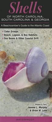Shells of North Carolina, South Carolina & Georgia  : A Beachcomber's Guide to the Atlantic Coast