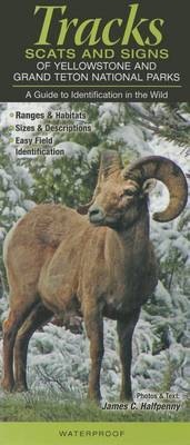 Tracks, Scats & Signs of Yellowstone & Grand Teton National Parks  : A Guide to Identification in the Wild