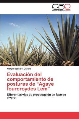 Evaluacion del Comportamiento de Posturas de Agave Fourcroydes LEM