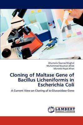 Cloning of Maltase Gene of Bacillus Licheniformis in Escherichia Coli