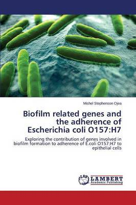 Biofilm Related Genes and the Adherence of Escherichia Coli O157: H7