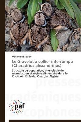 Le Gravelot a Collier Interrompu (Charadrius Alexandrinus)