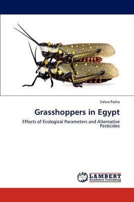 Grasshoppers in Egypt