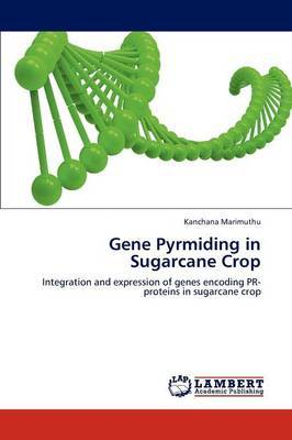 Gene Pyrmiding in Sugarcane Crop