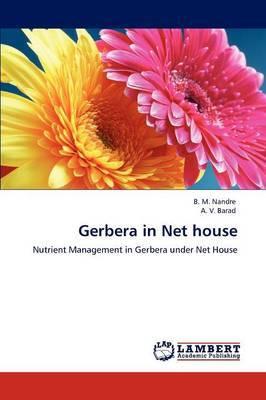 Gerbera in Net House