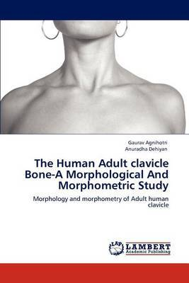 The Human Adult Clavicle Bone-A Morphological and Morphometric Study