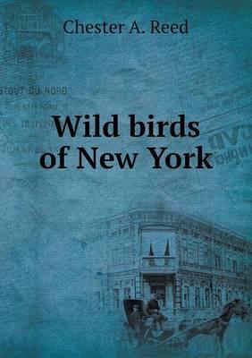 Wild Birds of New York