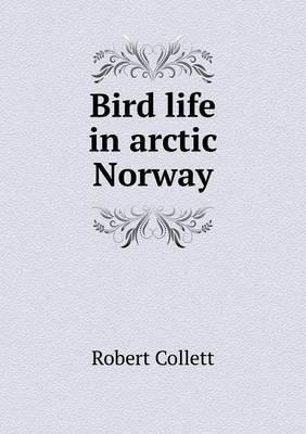 Bird Life in Arctic Norway