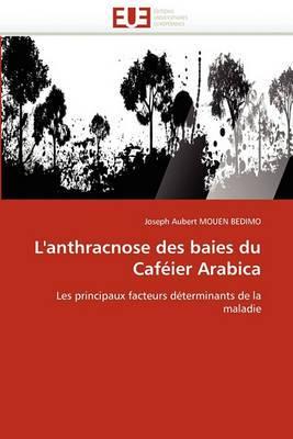 L''Anthracnose Des Baies Du Cafeier Arabica